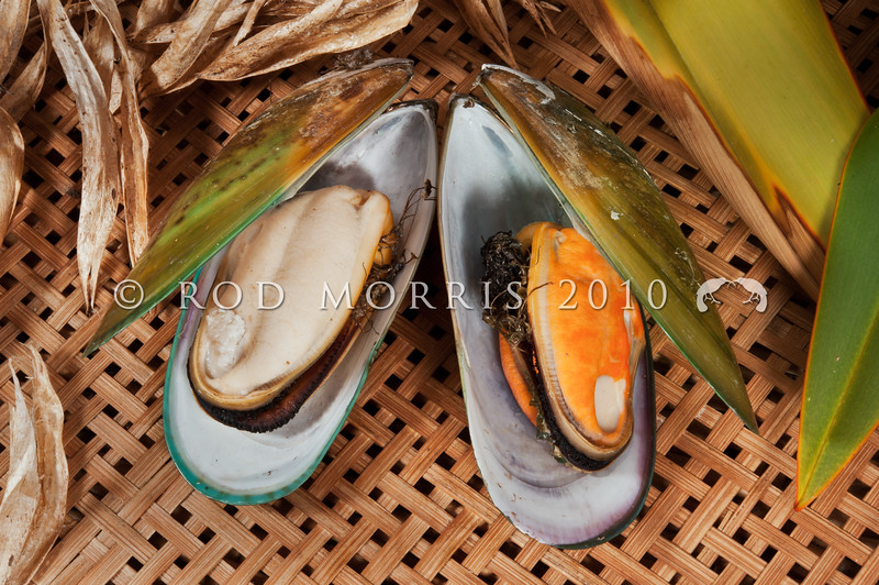 DSC_2997 Green-lipped mussel, or porohe (Perna canaliculus) showing the difference between male and female mussels. Males have creamy white flesh and females are apricot-coloured. This is one of the largest mussel species in the world, and it is now farmed commercially. Mussel aquaculture produced around 95,000 tonnes in 2010, with local and overseas sales earning in excess of $200 million. Dunedin *