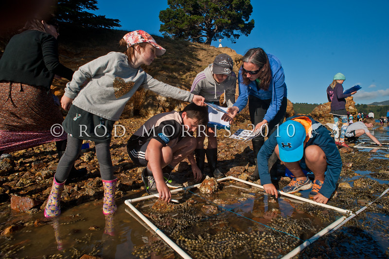 DSC_4332 Marine Metre Squared is an easy way for anyone to survey the plants and animals living on their local seashore. Here local school children spend time out of the classroom to take part in Mm2. The NZ Marine Studies Centre, at the University of Otago, is encouraging everyone to participate in long term monitoring of their marine environment. Anyone can take part, from individuals to families and schools, and even community groups. Yellow Head, Otago Harbour *