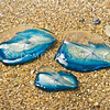 DSC_4183 By-the-wind-sailor (Velella velella) a free-floating hydrozoan that lives on the surface of the open ocean. Their most obvious feature is a small stiff sail that catches the wind and propels them over the surface of the sea. In summer they may be stranded by the thousand on beaches, such as here. There is only one known species. Paekakariki *