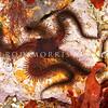 DSC_4680 Oar brittle star (Clarkcoma bollonsi) occurs from ~20 m to 370 m in New Zealand waters. Blueskin Bay *