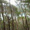 Coastal Track.  Torrent Bay through the trees on Pit Head.