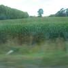 more corn????
