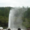 Lady Knox Geyser at full blast.  I don't think Old Faithful has anything to worry about.