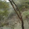 Wai-O-Tapu Thermal Park.