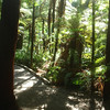 Red Wood Forest, lots of fern trees there too