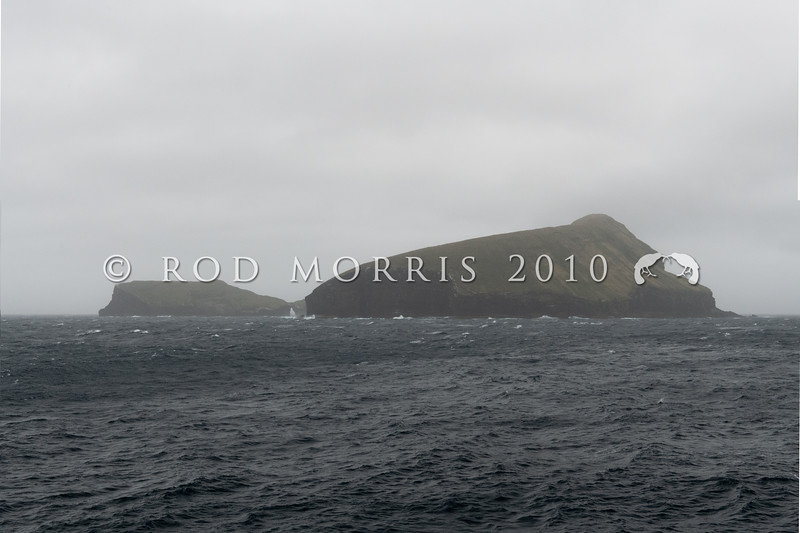 DSC_2842 The black, volcanic cliffs of Bollons Island (2 square kilometers) loom through sea fog, off the larger, main Antipodes Island (60 sqare kilometers *