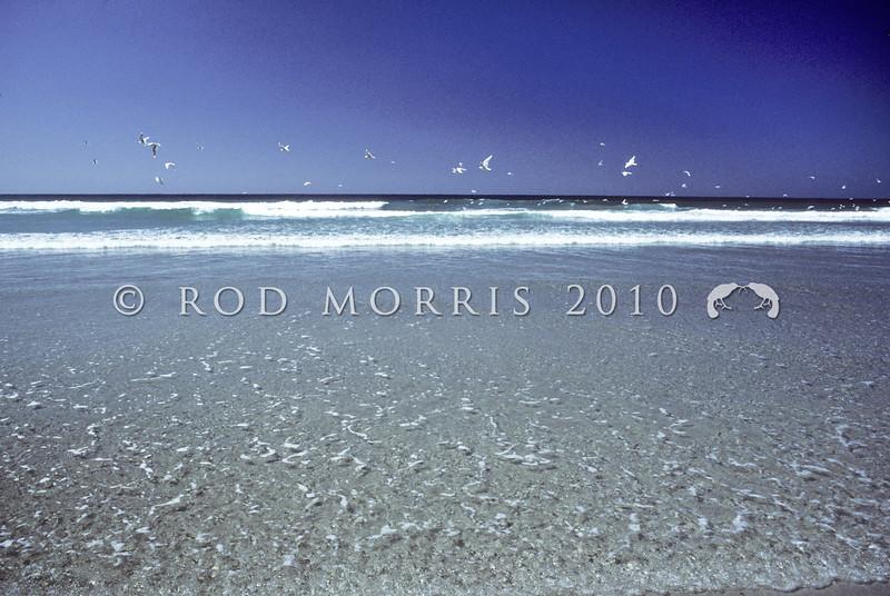 11001-63419 Gulls over a receding tide, Papanui Beach *