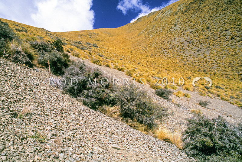 11003-52018 Scree slopes above Balmaccan stream, Upper Rangitata *
