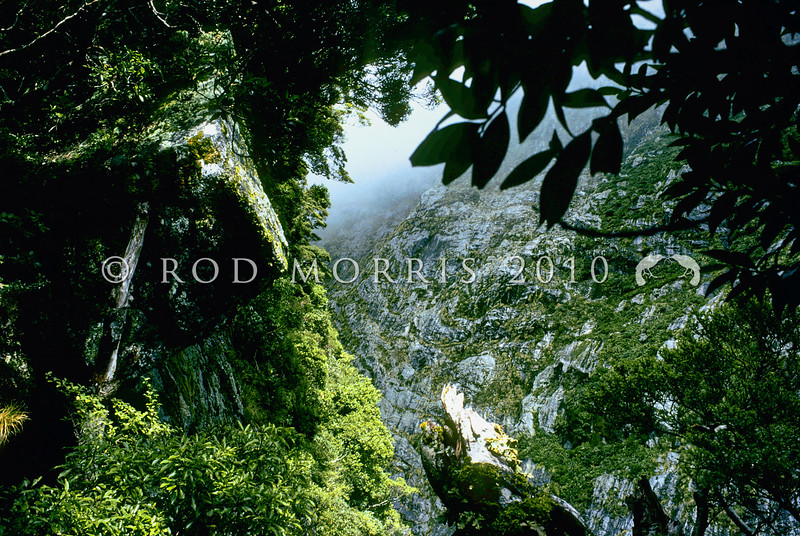 11001-70401 Fiordland scenery. View of 'Shadowland Wall' from the leading spur in the Sinbad Gully head basin *