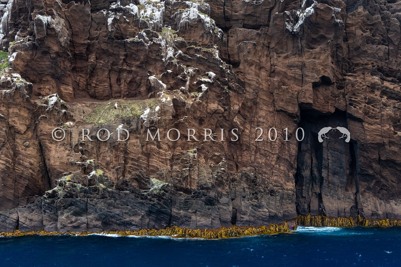 DSC_2844 View of the steep, volcanic cliffs and coastline of the main Antipodes Island (60 square kilometres). Antipodes Islands Group*
