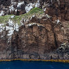 DSC_2843 View of the steep, volcanic cliffs and coastline of the main Antipodes Island (60 square kilometres). Antipodes Islands Group*