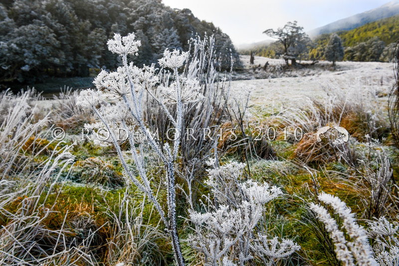 DSC_1904 Frost on weeds and vegetation along the Waikaia River flats in winter. Piano Flat, Southland