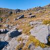 DSC_8858 Visitors to the Denniston Plateau wander through the dwarf vegetation of Conglomerate Stream near the escarpment edge *