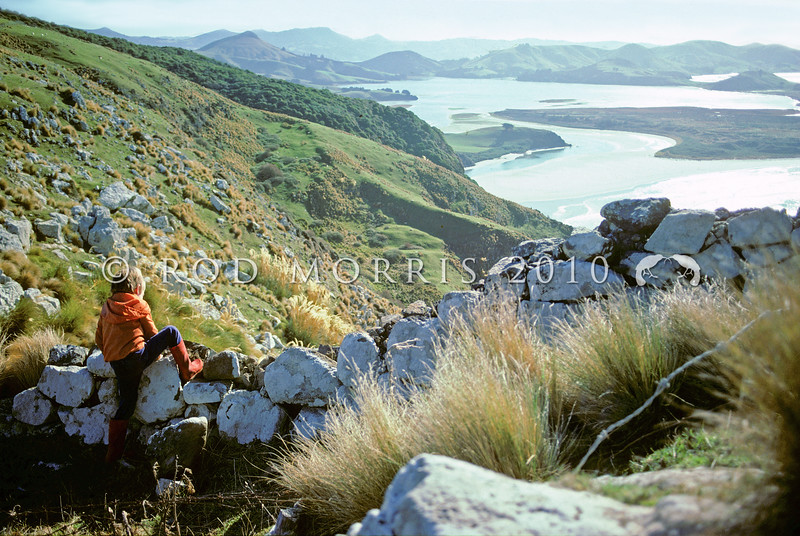 11011-85013 Otago Peninsula scenery. Jamie climbs a drystone rock wall on the hill overlooking Hoopers Inlet *