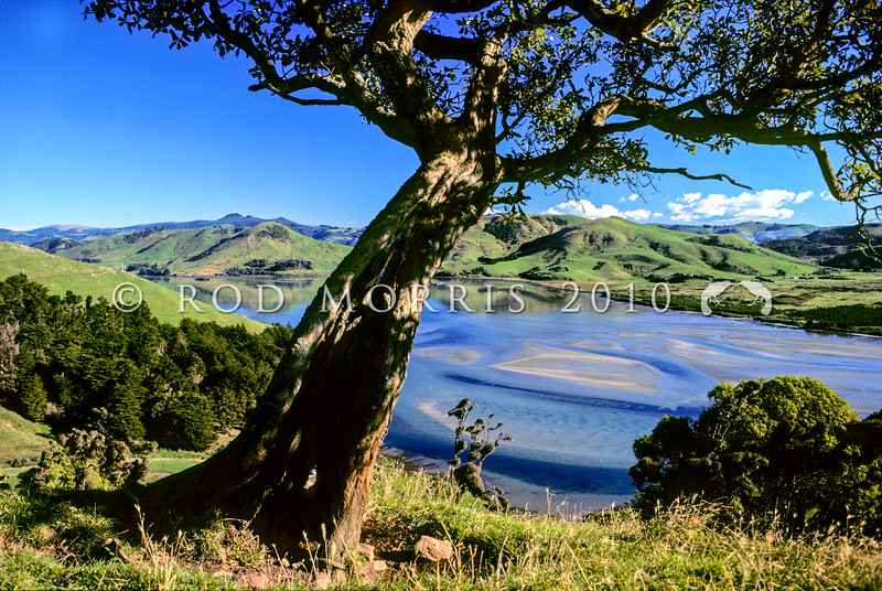 11011-85022 Otago Peninsula scenery. Papanui Inlet at low tide framed by an old Ngaio tree on farmland *
