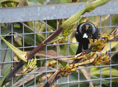 28 tui by fence