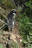 penguin (19)