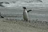 penguin (32)