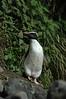 penguin (4)