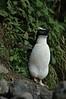penguin (6)