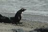 penguin (44)