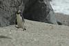 penguin (28)