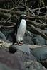 penguin (12)