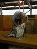 Arthurs_Pass_Sheep_NZ0006