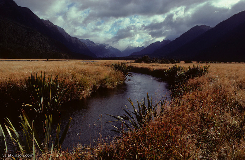 milford sound spring creek
