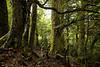 NZ beach forest #1