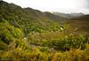 overview of nz wilderness stream