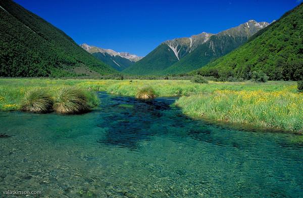 new zealand spring creek