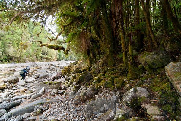 walking the river corridor- no trails