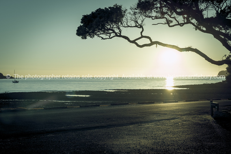 Pohutukawa tree branch overhanging beach and framing sun just above horizon