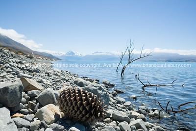 Sticks and gaint pine cone in calm water on stony shore of Lake Pukaki.