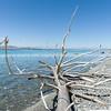 Lake Pukaki, South Island NZ