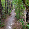 Walking track through bush