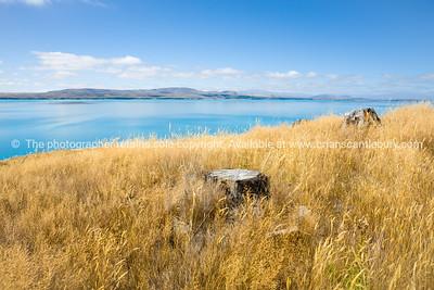 Canterbury, Mackenzie Basin, South Island New Zealand.