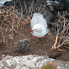 Red-billed gulls nesting site on coastal cliff on Whitewash Head Road