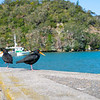 Whitianga harbour scene