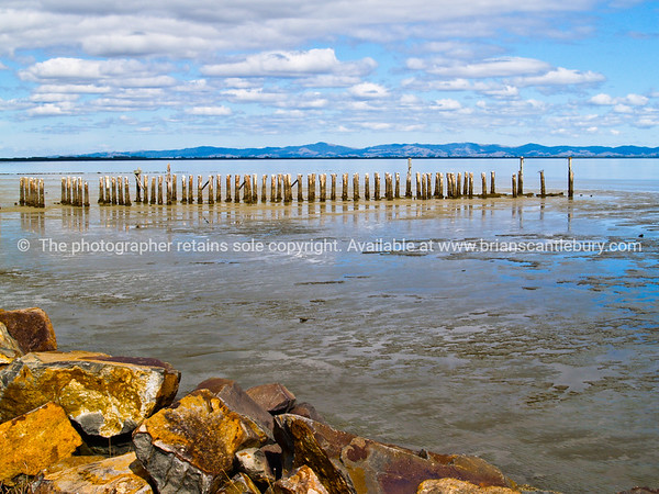 Firth of Thames,  rocky foreshore and remains of old Burke Street Wharf.
