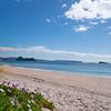 White sandy Hahei Beach