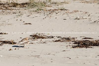 cooks beach-coromandel-outdoors-7