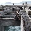Tokomaru Bay: old disused wharf remains. New Zealand images.