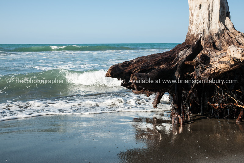 Washed up log. Waiotahi, East Coast. New Zealand Images.