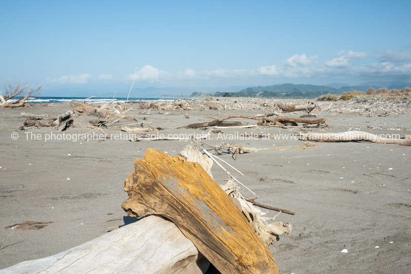 Beach driftwood. East Coast. New Zealand Images.