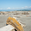 Beach driftwood. East Coast. New Zealand Images.