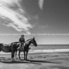 Horses are a way of life on New Zealand's East Coast.<br /> Rider stops and helpfully presents his horses for the camera. Thank you.<br /> Model Release; No.