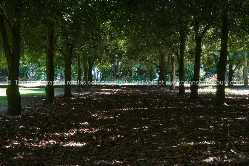Macadamia tree grove. Whanarua Bay orchard. New Zealand images.