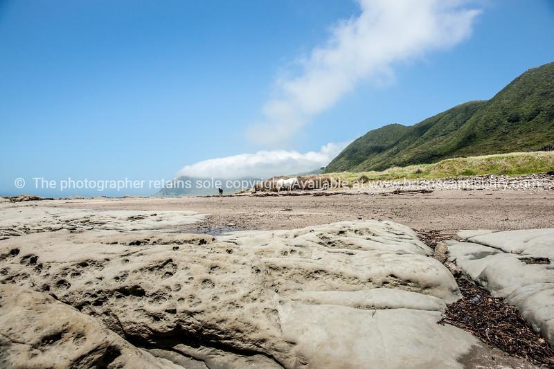 Horses on beach, Te Araroa